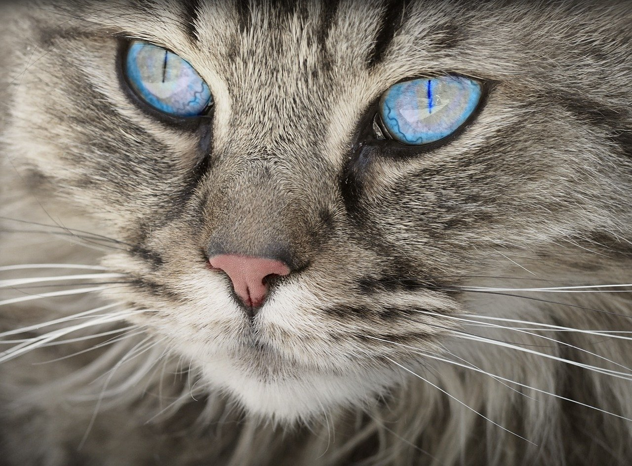 Natürliches Hausmittel gegen entwurmende Katzen